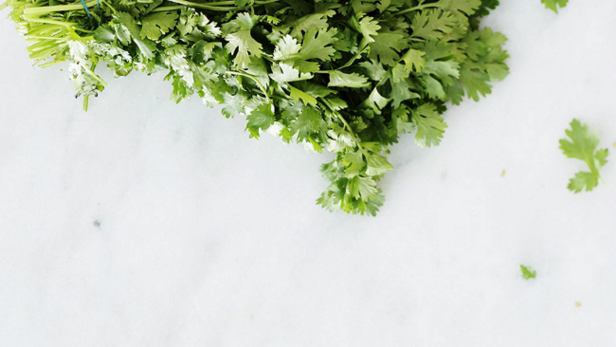 סלט עשבי תיבול, קשיו ולימון. צילום: דניה ויינר   סגנון: אוריה גבע