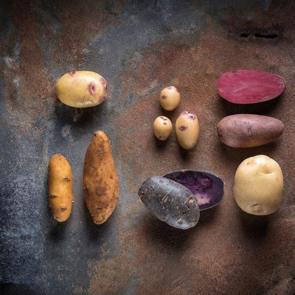 זני תפוחי אדמה. צילום: אנטולי מיכאלו