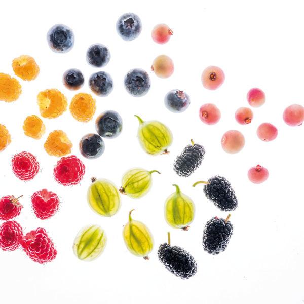 מחזירים את הבחירה, אוכלים פירות פירות יער טריים. צילום: אנטולי מיכאלו