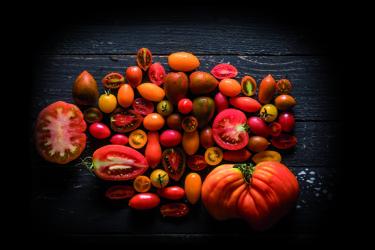 זנים של עגבניות. צילום: אנטולי מיכאלו