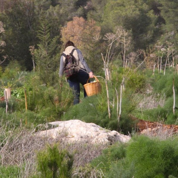 הצטיידו בסלסילה. ליקוט פטריות באזור הגלבוע. צילום: ענבל ענברי מלמד