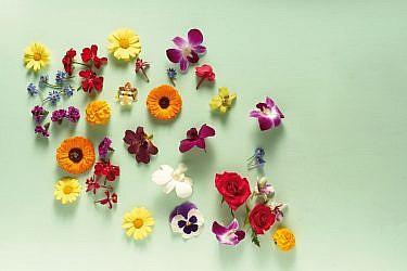 פרחי מאכל. צילום: אנטולי מיכאלו