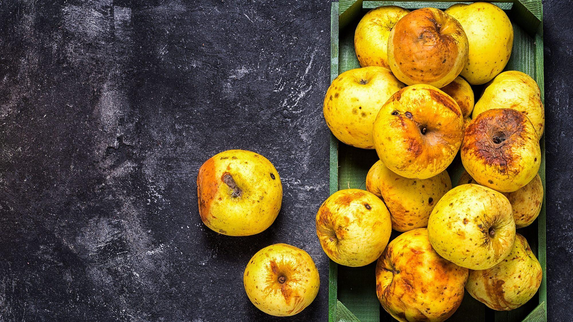 תפוחים שמיועדים לזריקה- בזבוז מזון. צילום:shutterstock