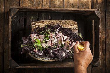 סביצ'ה אינטיאס עם אוסקה, בצל סגול וצנוניות מוחמצות של שף אסף שנער. צילום : אפיק גבאי