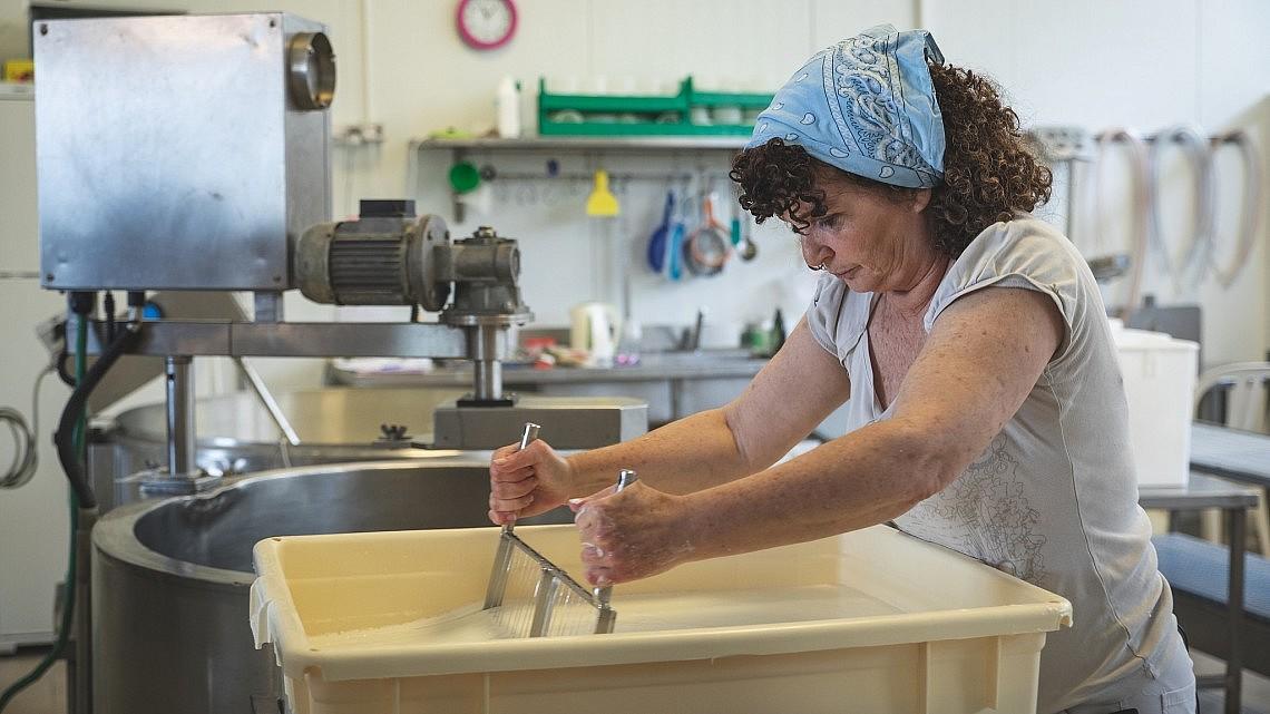 """""""היום אני מתרכזת אך ורק בייצור"""" מיכל מור מלמד בחדר הייצור של מחלבת שירת רועים שבגליל. צילום: שני בריל"""