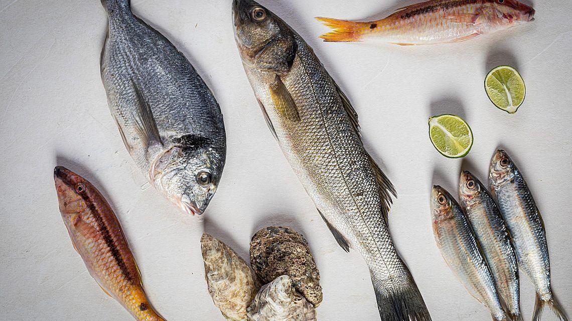 דגים בקנקון. צילום: יונתן בן חיים