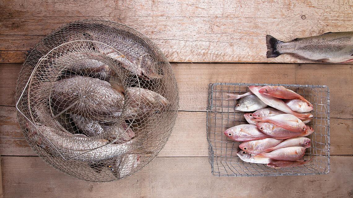מדריך לסוגי הדגים. צילום: דניאל לילה, סגנון: עמית פרבר