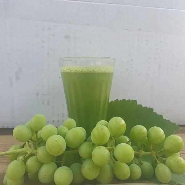 מיץ ענבי בוסר (חוסרום) של מיכל חביביאן. צילום: מיכל חביביאן