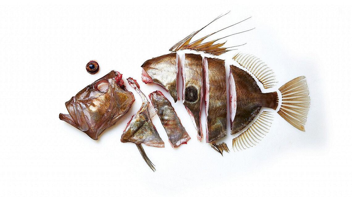 THE WHOLE FISH COOKBOOK (צילום: רוב פלמר)