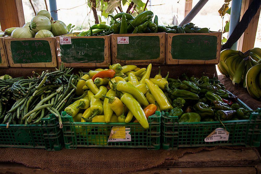 קוטפים ירקות לאנשים שוק ירקות אורגני במשק חביביאן, נחם. צילום: מאיי תדהר