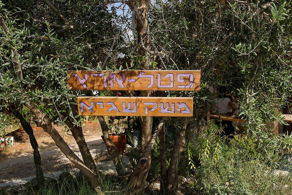 פול טרי, מוצרי פטל ותוצרת אזורית פטל ארץ, תעוז. צילום: מאיי תדהר