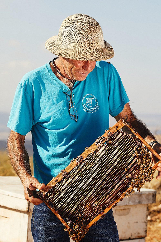 מערכת יחסים סימביוטית עם הדבורים משה רק, מכוורת מכמנים. צילום: מתן כץ