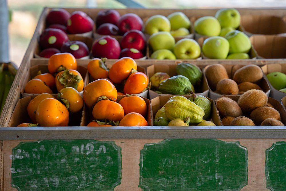 לעודד חקלאות מיטיבה משק חביביאן. צילום: מתן סוויסה