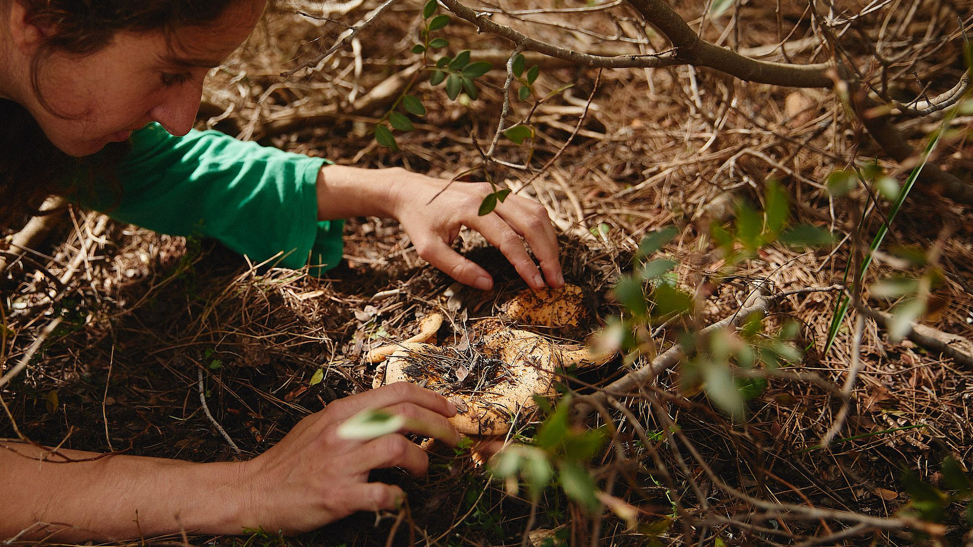 מיא גינזבורג מגלה פטרייה ביער באזור משגב (צילום: מתן כץ)