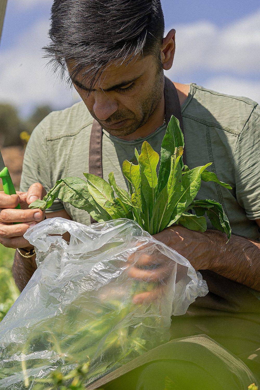 הליקוט המסורתי זוכה לעדנה מחודשת שף עלי ח'טיב מלקט עולש בר. צילום: מידן גיל ארוש
