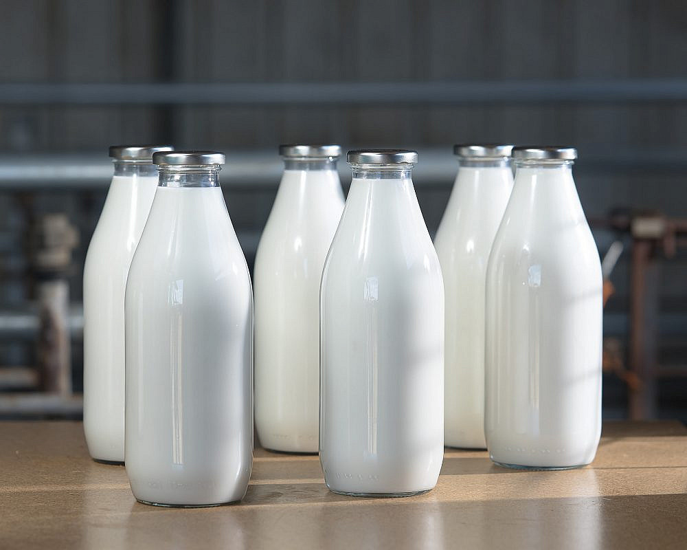 חלב עשיר ומתקתק חלב עיזים של רון דוד | צילום: מידן גיל ארוש